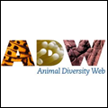 Animal Diversity Web icon