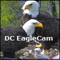 DC Eagle Cam icon